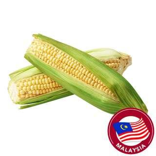 Pasar Sweet Corn