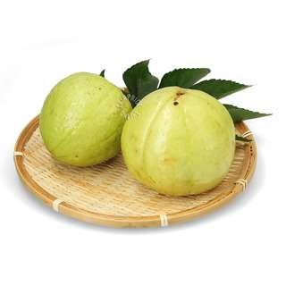 Pasar Thailand Guava - Seedless