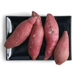 Japan Sweet Potato