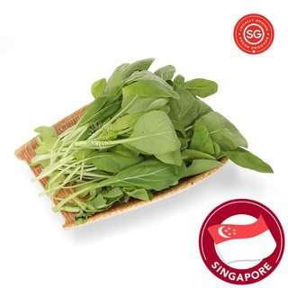 Sky Green Organic Cai Xin - Mini