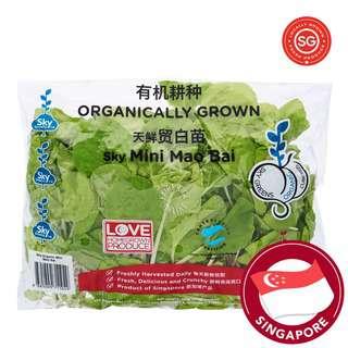 Sky Greens Organic Mao Bai - Mini