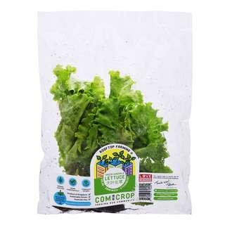 Comcrop Green Emerald Lettuce