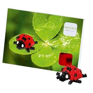 Brixies Ladybird (220.019)