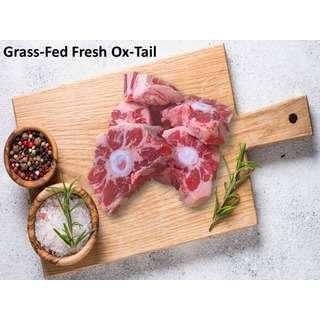 Qmeat Beef OX Tail Halal