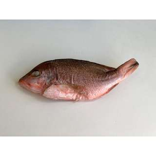 BluCurrent Frozen Red Snapper Whole Fish