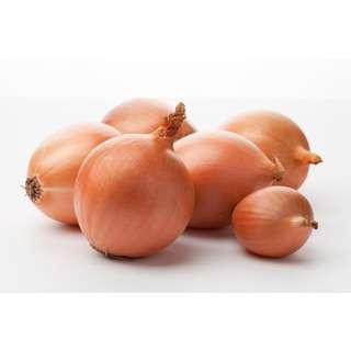 Grozer Yellow Onion (Australia/Netherlands)
