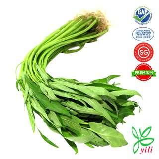 Yili Farm Premium Kang Kong