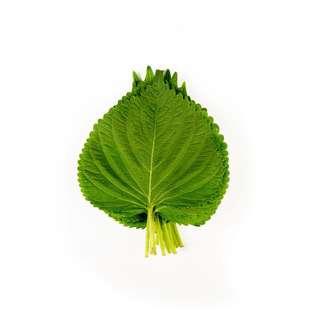Korea Perilla Leaves
