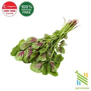 Netafarm Pesticide-Free Red Bayam Spinach