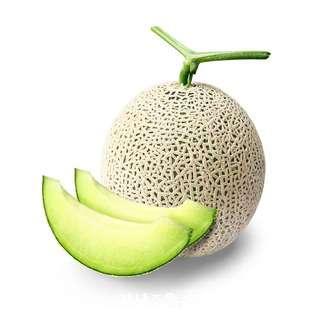 Korea Premium Musk Melon