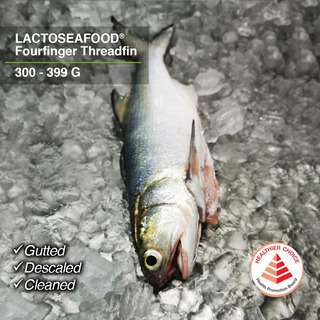 LACTOSEAFOOD Fourfinger Threadfin 300-399g