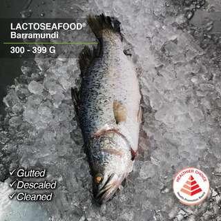 LACTOSEAFOOD Barramundi (Seabass) 300-399g