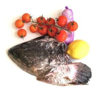 BluCurrent Hybrid Grouper Fish Head 400-500g