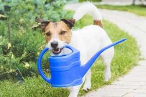 Pets & Gardening
